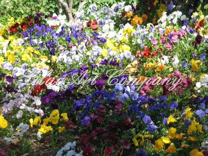 flowers art washes - photo #17
